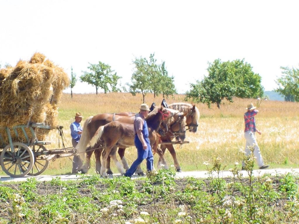 horses with hay wagon