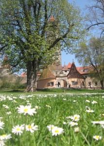 Rothenburg_Tourismus_Service2C_Burgtor_im_Fruhling_Blumen2C_A