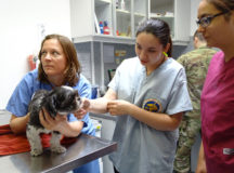 From left, Dr. Sandra Brosig, veterinarian with the Ansbach Veterinary Treatment Facility, physically examines a patient while Cassandra Ferguson and Arcelia Escobar, cadets with the 9th Junior ROTC Battalion, shadow Brosig to learn about a career in veterinary medicine. (Courtesy photo by Alicia Kura, 9th JROTC Bn.)