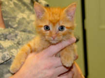 Cats traveling stateside must show no signs of disease. Rabies vaccination is required in most states. (U.S. Army file photo by Erin Murray, Army Flier)