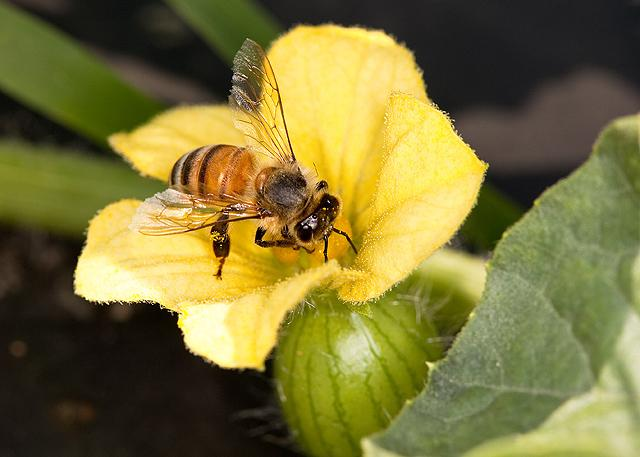 What's buzzing in our gardens?