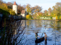 Fish Harvest in Dinkelsbühl (Photo courtesy of Stadt Dinkelsbühl)