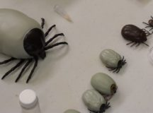 Public Health Command Europe offers guidance on how to stay tick-free this year