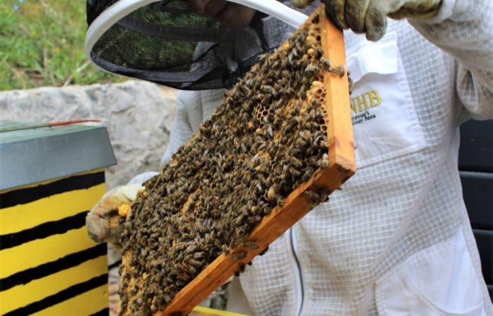 USAG Ansbach community member has overwhelming impact on the garrison beekeeping program