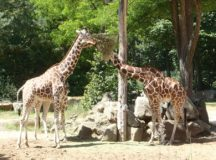 Was ist los in Franken? Zoos and wild life parks
