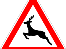 Wildlife accidents and the consequences